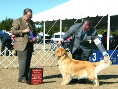 Daniel Breim - handler - golden retriever